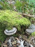 Naturligt växa svamp Fotografering för Bildbyråer