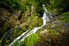 naturligt vatten för flöde royaltyfri bild