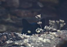 Naturmakeup Royaltyfria Bilder