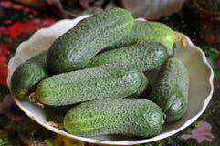 Naturmort cocumbers 免版税库存照片