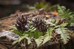 Naturmort della foresta Fotografie Stock Libere da Diritti