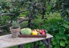 Naturmort w ogródzie Obrazy Stock
