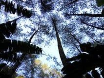 Naturmt-puntang indonesia Arkivfoton