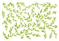 Naturmuster-Hintergrundillustration, grüne Blattfarbe Stockbild