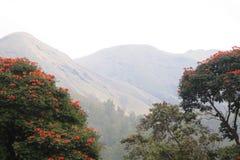 Naturnederlag bak träden Royaltyfria Bilder