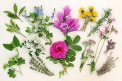Naturopathic草本和花 免版税库存照片