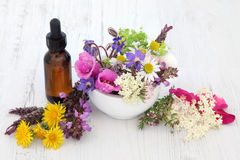 Naturopathic Flowers and Herbs Stock Photos