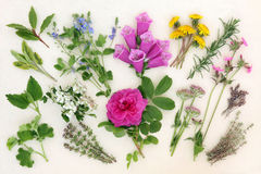 Naturopathic Herbs and Flowers Royalty Free Stock Photo