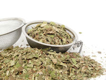 Naturopathy, dried birch leaves Stock Image