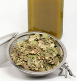 Naturopathy, dried birch leaves Royalty Free Stock Images