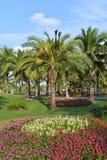naturpalmträd för liggande 3d Royaltyfria Foton