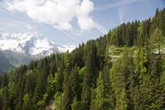 Naturpark Adamello Brenta Stockfotografie