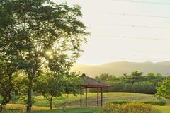 Naturplats i trädgård arkivbild