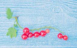 Naturprydnad Röd vinbär på ljuset - blå träbakgrund Royaltyfri Fotografi