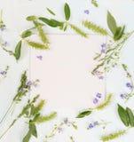 Naturrahmen mit verschiedenen Kräutern und Blumen Lizenzfreie Stockfotografie