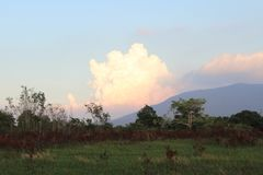 Naturrasen archiviert nahe dem Nationalpark lizenzfreies stockfoto