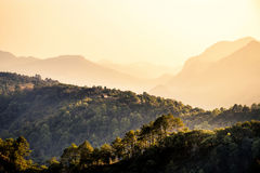 Naturreisekonzept: Nebelhafte Sommerschicht des Baums und des Berges stockfotos