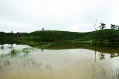 Naturrenhetgräs på flodbanken Arkivbild