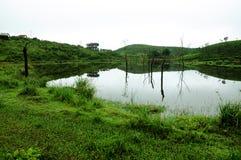 Naturrenhetgräs på flodbanken Arkivfoto