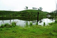 Naturrenhetgräs på flodbanken Arkivbilder