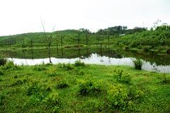 Naturrenhetgräs på flodbanken Fotografering för Bildbyråer