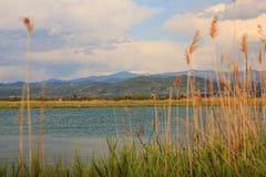 Naturreserv av den Isonzo floden Fotografering för Bildbyråer