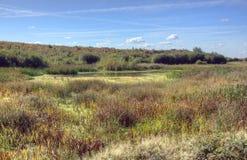 Naturreserv, Fairburn Ings fotografering för bildbyråer