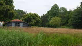Naturreserv i Nederländerna arkivbilder