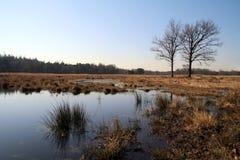 Naturreserv Lagen Vuursche fotografering för bildbyråer