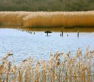 Naturreservat Stockbild