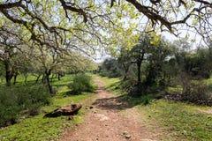 Naturreservat Alonei Abba am Frühling Lizenzfreies Stockbild