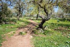 Naturreservat Alonei Abba am Frühling Stockbild