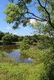Naturreservat Longton Brickcroft, Lancashire Stockbild