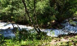 Naturreservat teberda Karachayevo-Cherkessia stockbilder