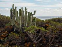 Naturreservat von Malpais de Rasca Lizenzfreie Stockfotografie