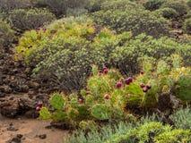 Naturreservat von Malpais de Rasca Lizenzfreies Stockbild