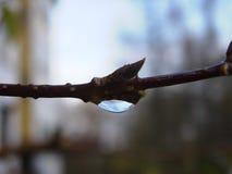 naturreva Fotografering för Bildbyråer