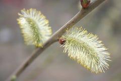 naturryss Royaltyfria Bilder