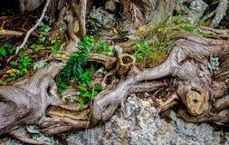 Naturs abstrakt begrepp Royaltyfri Fotografi