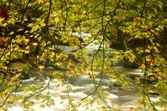 Naturs detaljer i Great Smoky Mountains Arkivfoton
