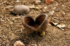 Naturs hjärta Arkivbild