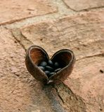 Naturs hjärta Arkivfoto