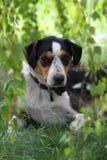 Naturs hundhus Arkivfoton
