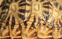 Naturs modeller - sköldpadda Royaltyfria Bilder