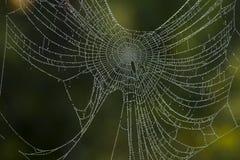 Naturs prydde med ädelsten halsband: Spindels rengöringsduk med daggdroppar royaltyfri fotografi