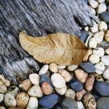 Naturs textur Arkivbilder