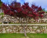 Naturschönheit eines rosa Baums stockbilder