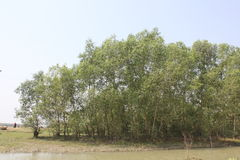 Naturschönheit von Bhola-Insel Stockfotografie