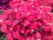Naturschönheitsblume in Bangkok Stockbilder
