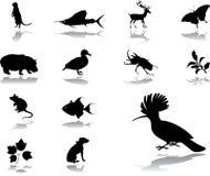 naturset för 98 symboler Fotografering för Bildbyråer